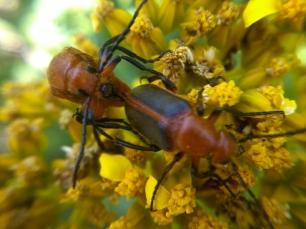 bug love (3)